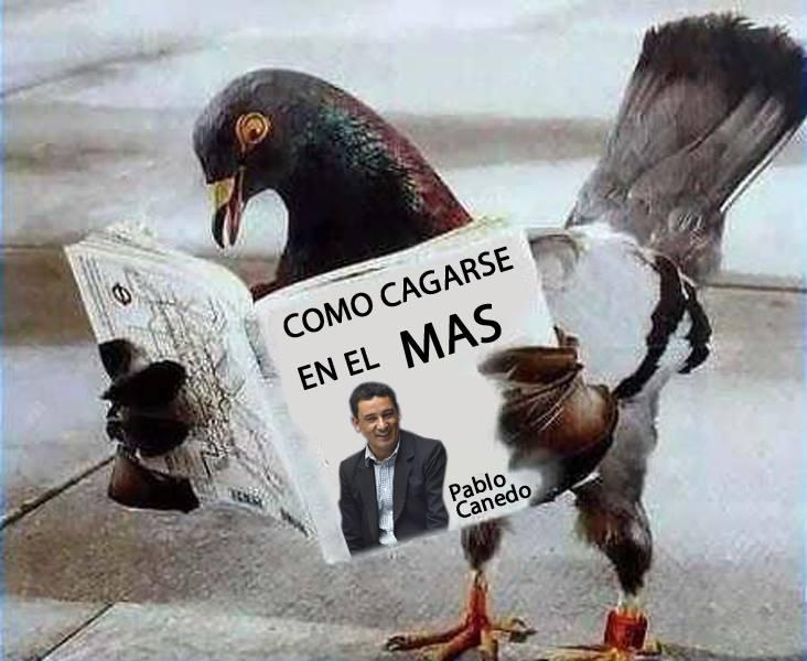 Meme del manual de Pablo Canedo sobre como cagarse en el MAS