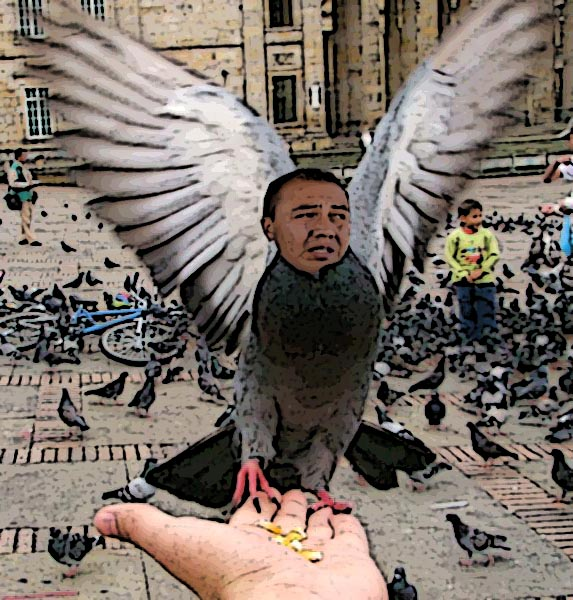 Caricatura de la paloma de plaza